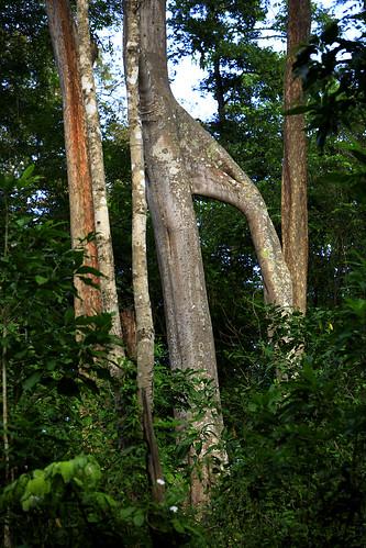 Tue, 11/20/2007 - 16:41 - Huay Kha Khaeng Wildlife Sanctuary/ Thailand. Image from the 50 ha permanent observaton plot of the CTFS.