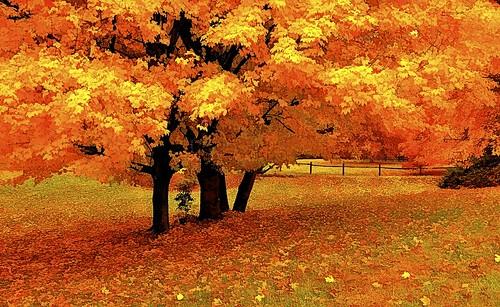 autumn trees orange fall maryland autumntrees southernmaryland calvertcountymaryland leicadlux3 colorphotoaward thebestofday huntingtownmaryland gününeni̇yisi
