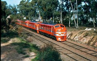 B83 & B82 at Kangaroo Flat Vic   by rodneygaulke