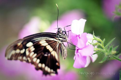 usa flower macro nature closeup butterfly garden nikon colorful dof bokeh maryland explore silverspring insert brooksidegarden d7000
