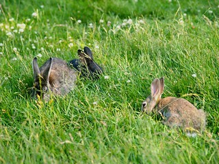 The Bunnies of Jericho Beach | by JeffaCubed