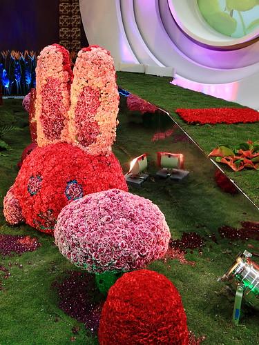 500D_0006 爭艷館~台灣花卉展--台灣花卉之星-華麗之星(火鶴花)   by Solomon's Photography Blog