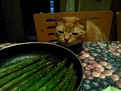 Il mio gattone scopre gli asparagi