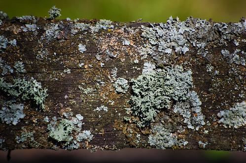 Lichen on a bench