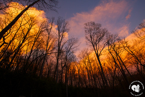 trees sunset sky clouds forest 365 day99 pisgahforest project365 efs1022mmf3545usm mostly365 wncnc vjl365