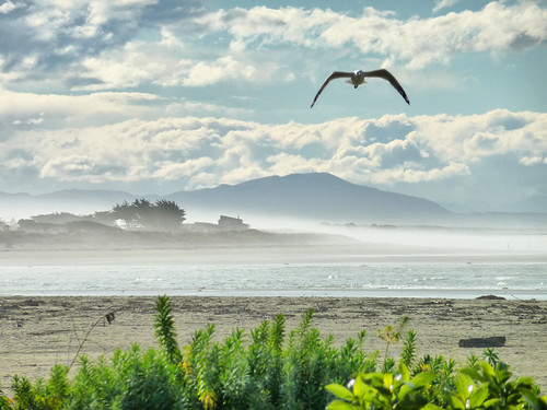 ocean sea newzealand christchurch mist seascape landscape coast pacific seagull gull canterbury coastal nz southisland seashore hdr southshore stevetaylor