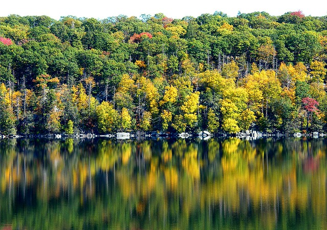 Yellow Autumn Reflection