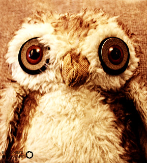 105/365 Big Owl   by Hexagoneye Photography