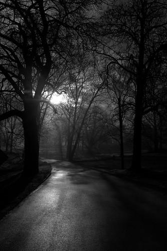 park county trees white black sunrise lancaster