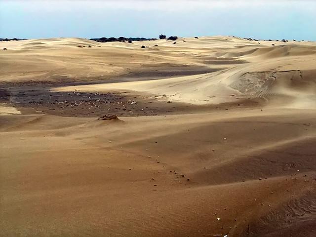 Dunes de l'Espiguette - 1