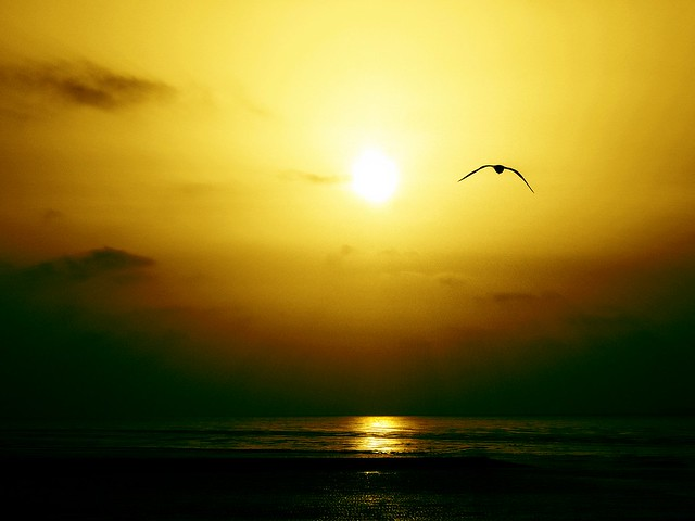 The free world of Jonathan Livingston Seagull