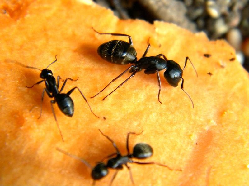 """""""Ants"""""""
