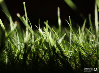 114/365 This side the Grass is greener | by Hexagoneye Photography