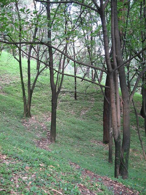 Árboles y humedad. Cerro Nutibara, Medellín