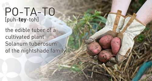 Growing Your Own Potatoes at Your Day | by Chiot's Run