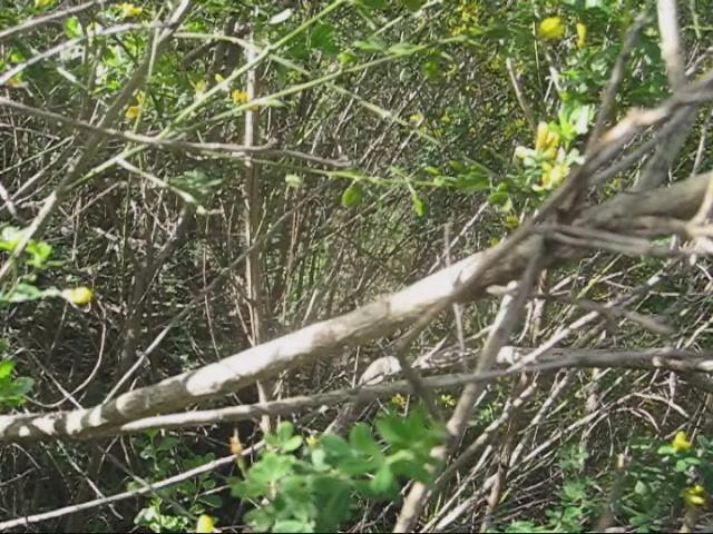 Big Prairie Plot 2, Before Broom Removal