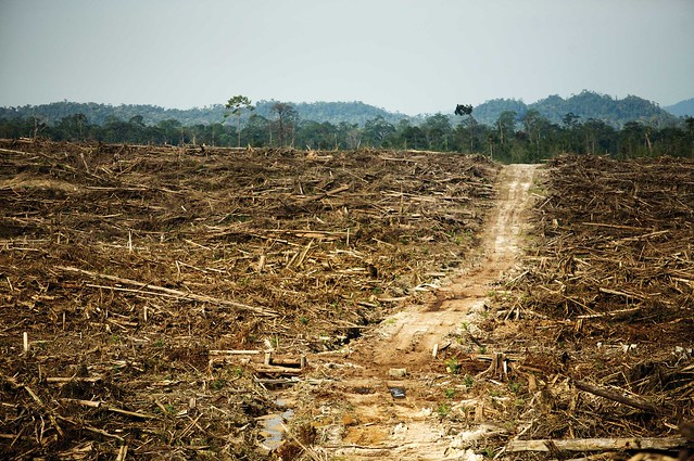 Cargill's Problems With Palm Oil