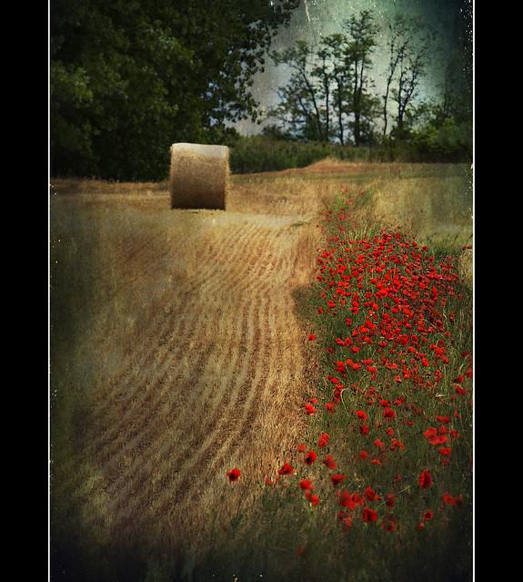Paesaggi padani : un tocco di rosso - a hint of red