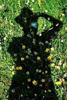 Fiori Ombra.Fiori Nell Ombra Luana Gabbianella Flickr
