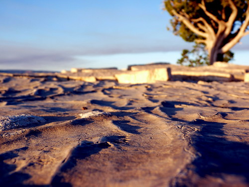 In a Dry and Thirsty Land... | by rachel_titiriga
