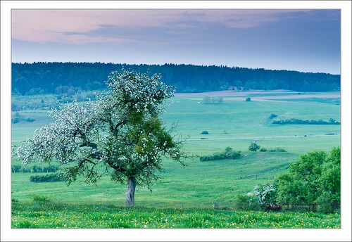 flowers sunset apple zeiss landscape geotagged spring sony hills bluehour luxembourg paysage lux variosonnar geo:lat=49 geo:lon=6 sonydslra900 2470mmf28zassm mlux maciejbmarkiewicz landscapelu 49°431164n6°133019e 22505300 71990000 schwachtgesmühle stuppicht