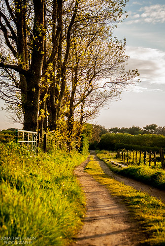 trees sunset nature field nikon country jersey bushes channelislands d3000