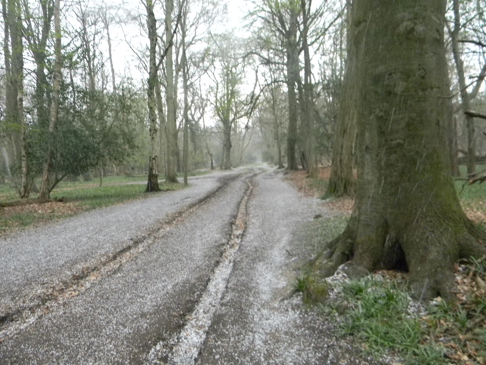 Hailstorm in Ashridge Hailstorm in Ashridge Tring to Berkhamsted