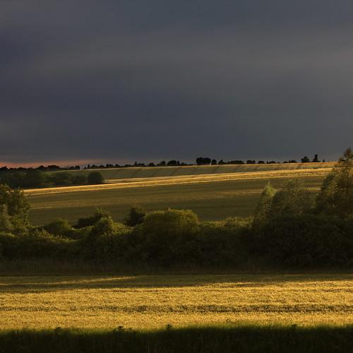 nature field gold cornfield hungary hills természet mező arany dombok naturepoetry somogymegye somogycounty búzamező
