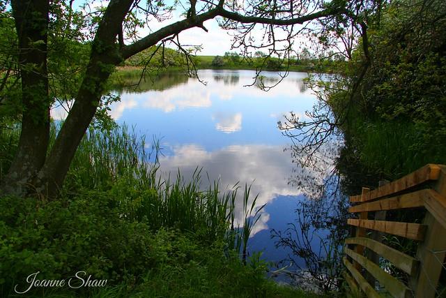 IMG_9130en Cowpen Bewley Woodland Park