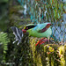 common green magpie by dannywong118