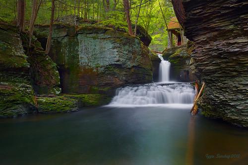 creek forest waterfall glow adams pennsylvania greenery