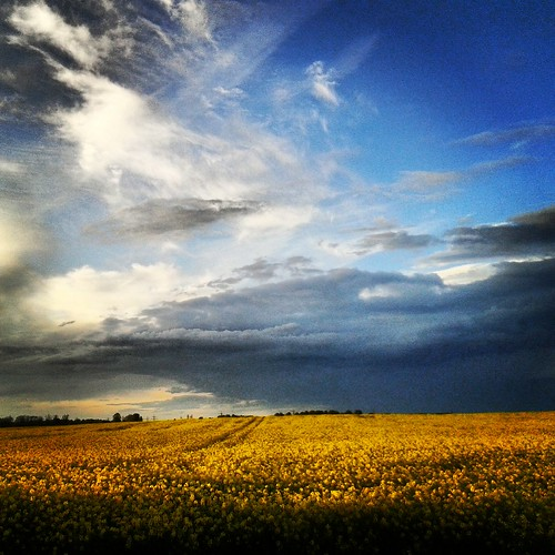uk blue light sky nature yellow clouds skyscape natural farming naturallight crops quicksnaps 2014 mobileart instagram agrigculture pete1074 petercarrphotography