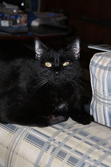 ~ Blacky ~