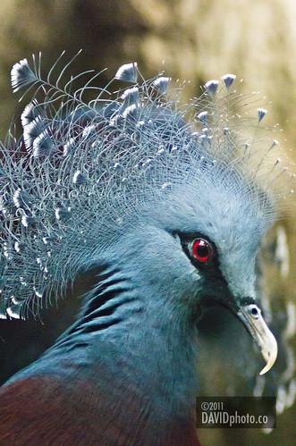 Bird 2 | by davidphotoco