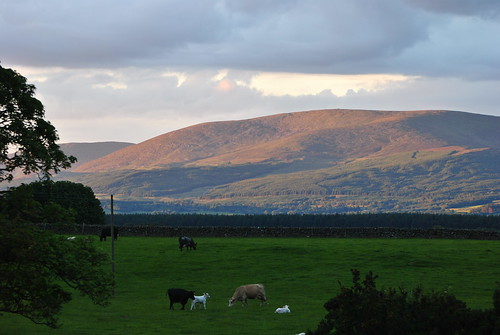 The view from Cairnharrow Cottage, Cairnhouse Farm,Newton Stewart,Wigtownshire...   by John5199