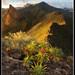Cruz De Los Misioneros: Tenerife by greyridge