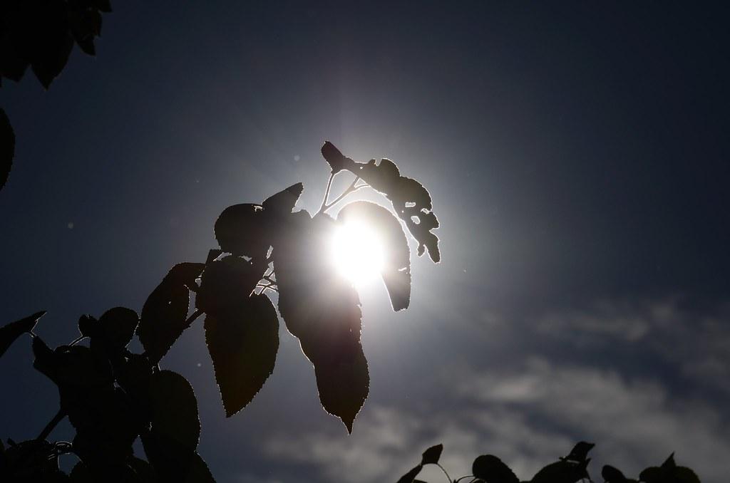 #FlickrFriday #HighNoon Sun