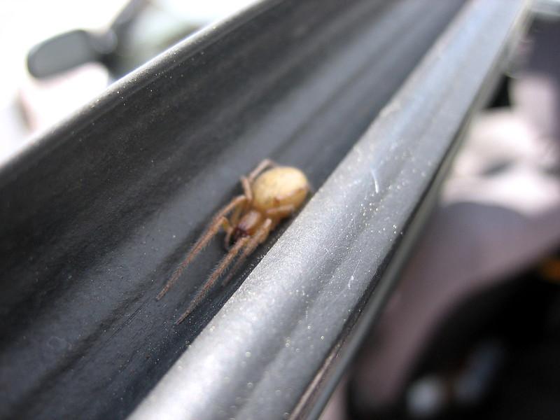 Little Spider Closeup