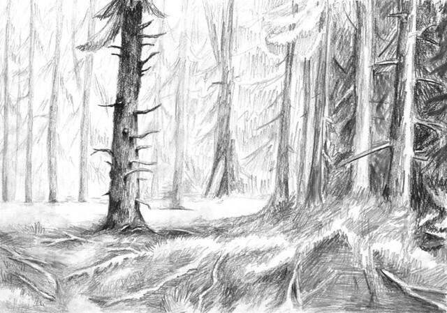 Wald Zeichnen Einfach