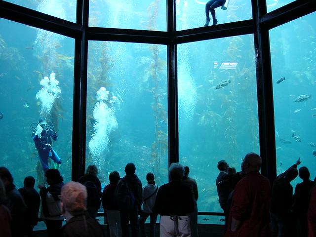 DSC00175, Kelp Forest, Monterey Bay Aquarium, California