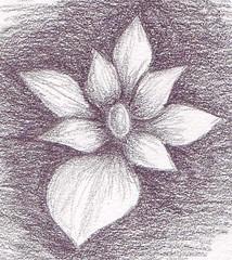 flower_a_12052006