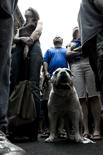 Bulldog and blue | by helvector