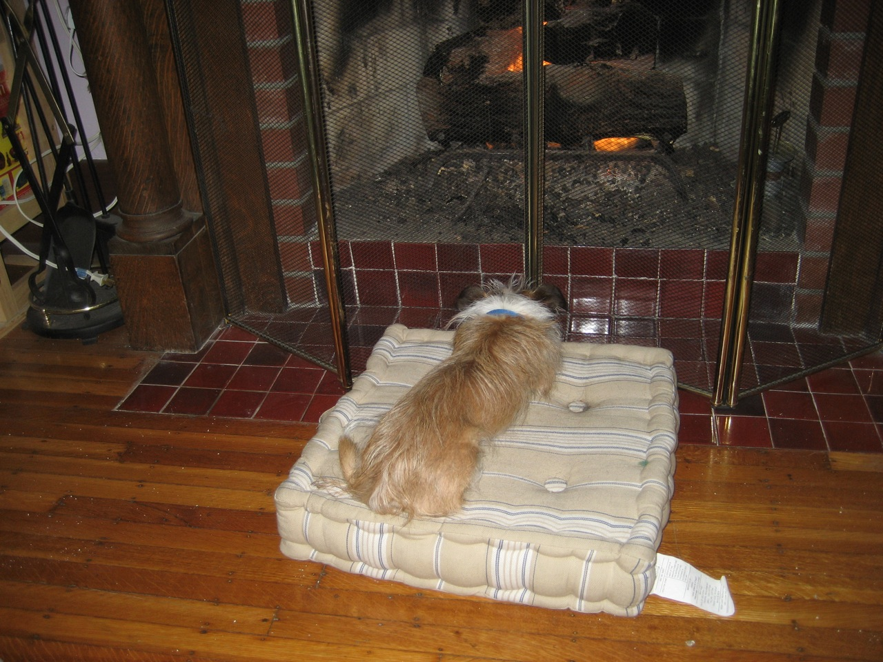 Spike in front of the fire