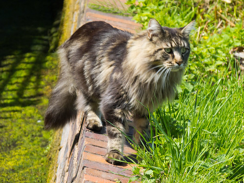 Cat on the wall of a canal overflow ditch