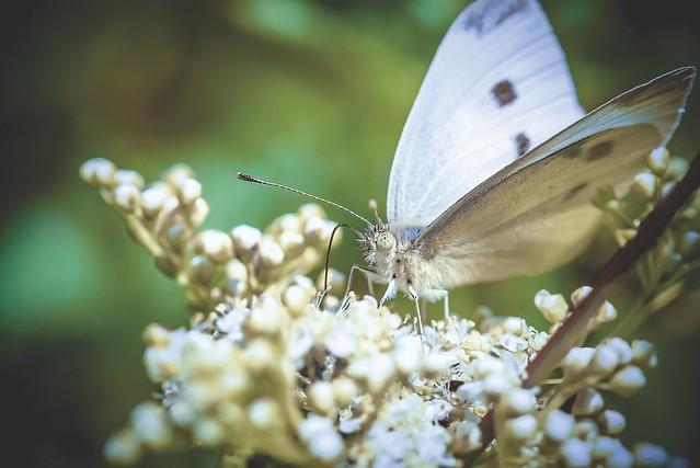 Ein Schmetterling auf einer wunderschönen Blüte