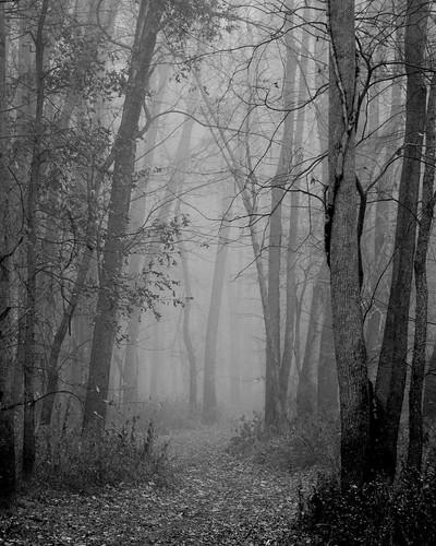 trees weather fog canon illinois midwest path stlouis troy trail rebelxs eos1000d