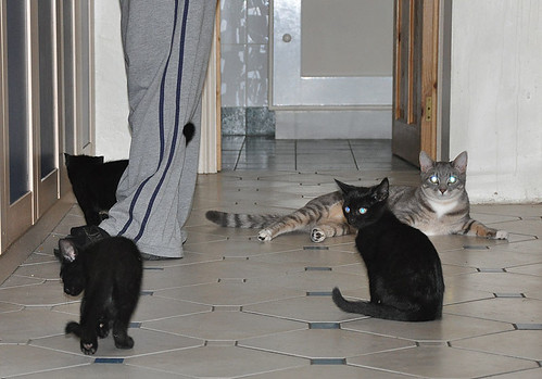 kittens and Nimbus