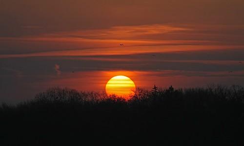 morning trees orange cloud sun lake fall sunrise michigan mygearandmepremium mygearandmebronze mygearandmesilver
