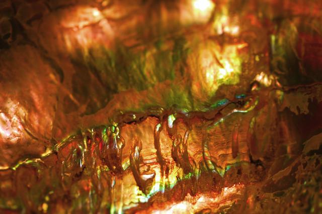 Abalone Macro I