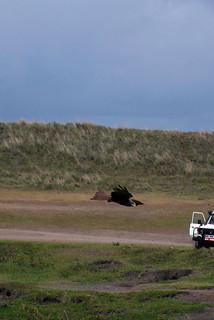 ンゴロンゴロ保全地域の画像 p1_24
